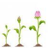auginimas